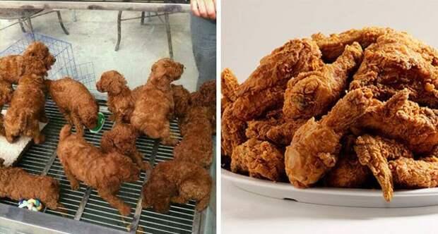 Слева - живые и здоровые щенки, справа - жареные куриные ножки. Не перепутайте! интересно, не еда, несъедобное, поразительно, странные сближенья, съедобное, удивительно, удивительное рядом