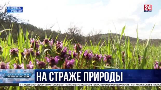 Экотуризм в городе-герое: Севприроднадзор готовит концепцию «зелёного» отдыха