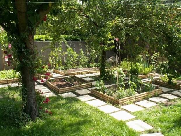 Вот какие огородные растения хорошо переносят тень