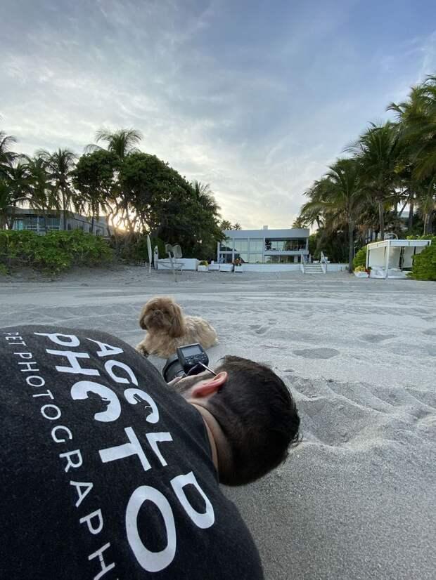 фотосессия для пса