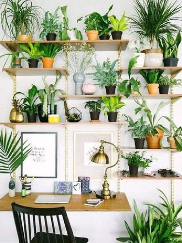 Можно озеленить всю стену, используя полки зеленый, лестницы, полки, растения, этажерки