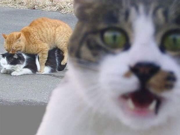 29 кошек, которые своим внезапным появлением скрасили фотографии хозяев