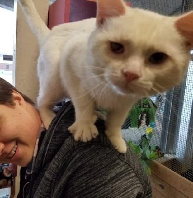 кот сидит на плечах