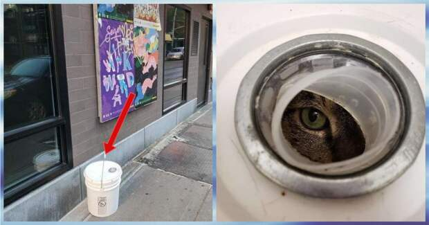 Из дыры в ведре на женщину смотрели зеленые глаза! Кто-то засунул кота в контейнер и подбросил к приюту…