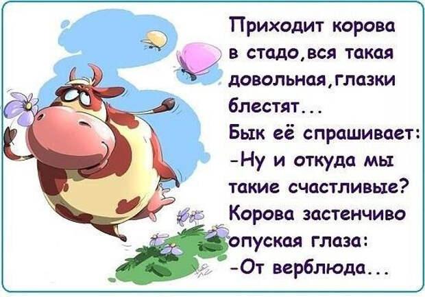1458158530_57-www.radionetplus.ru (548x383, 180Kb)