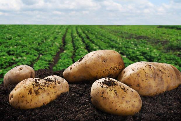 Законотворцы заставят платить за картошку на участке и штрафовать за свои семена. Правда ли это?