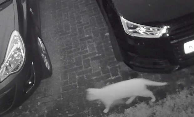 Камера наблюдения сняла как прошел кот, а за ним прошел след другого кота