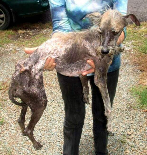 Бездомные собаки до и после приюта