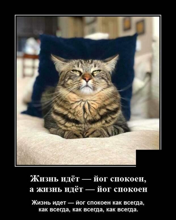 Демотиватор про гордого кота
