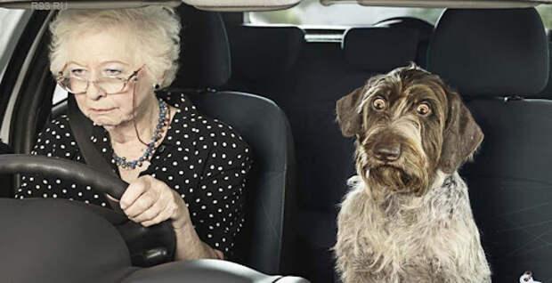 С бабушкой за рулем - Автомобильные статьи
