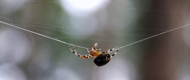 В парке «Тушинский» пауки начали выходить из зимней спячки