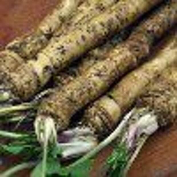 Когда убирать с грядки морковь, свеклу, сельдерей и другие корнеплоды на хранение