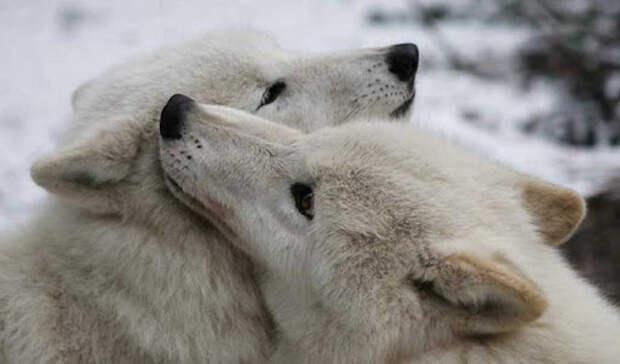 Самые трогательные фотографии влюбленных животных