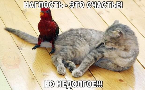 Хахатушки-веселушки