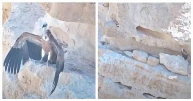 Доброты пост: сказ о том, как военные дроны спасли птенца белоголового сипа (2 фото + 1 видео)