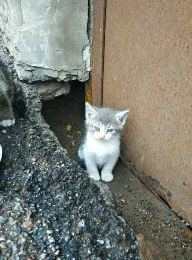 Пропадают маленькие ангелочки... Умоляем, пока есть кого спасать, пожалуйста, помогите!