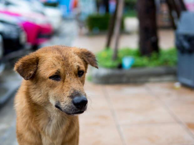 Как помочь собаке, с которой жестоко обращались? Каждое животное нуждается в уходе и заботе