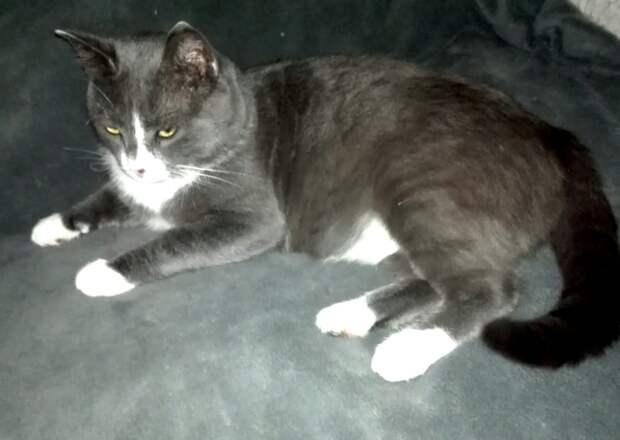 Семëн - уютный домашний увалень, ласковый, мурчательный котик, очень любит медитировать, глядя в окошко. Кому такое счастье?!!