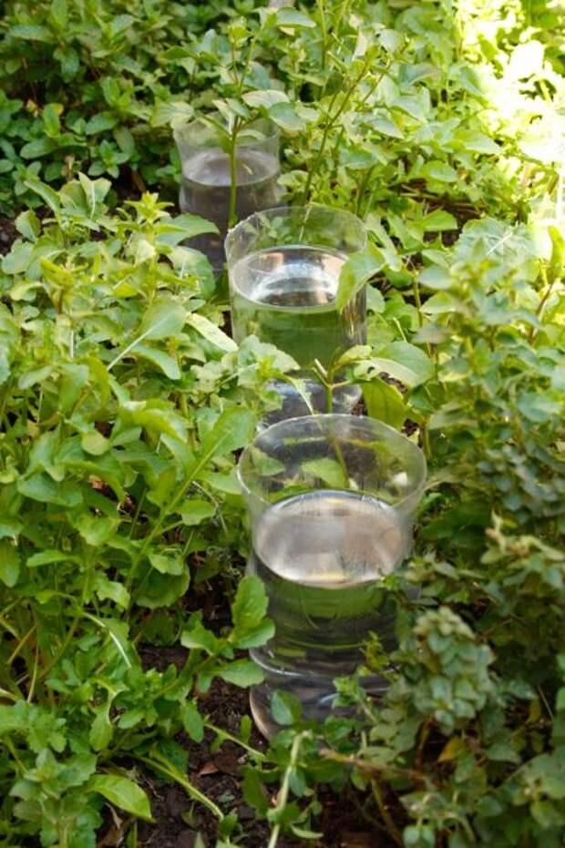 Помидоры и огурцы от засыхания может спасти достаточно простое изобретение. /Фото: heavyonwholesome.com