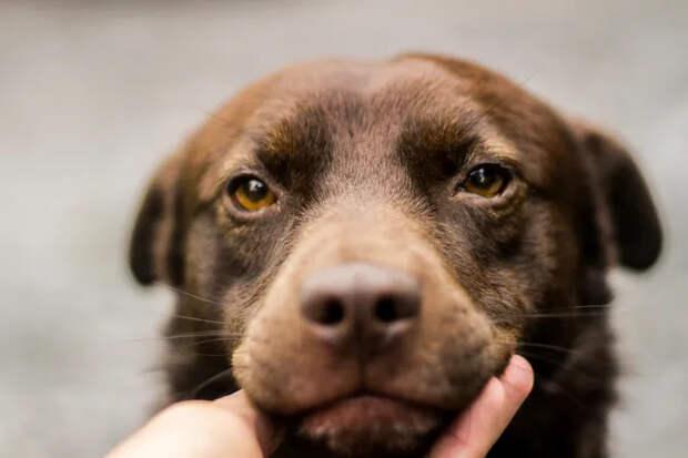 Счастливое спасение: истощённая собака замесяц набрала 20 кг инашла друзей