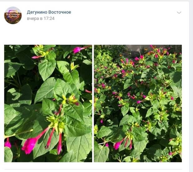 Фото дня: бабье лето в Восточном Дегунине