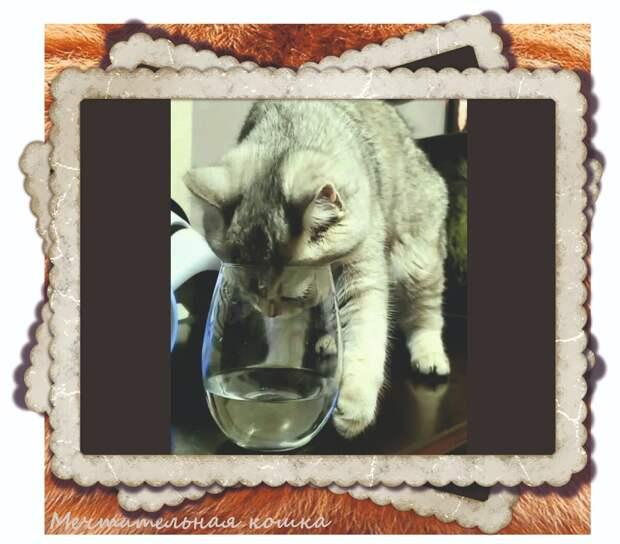 https://www.instagram.com/cat_and_hound/