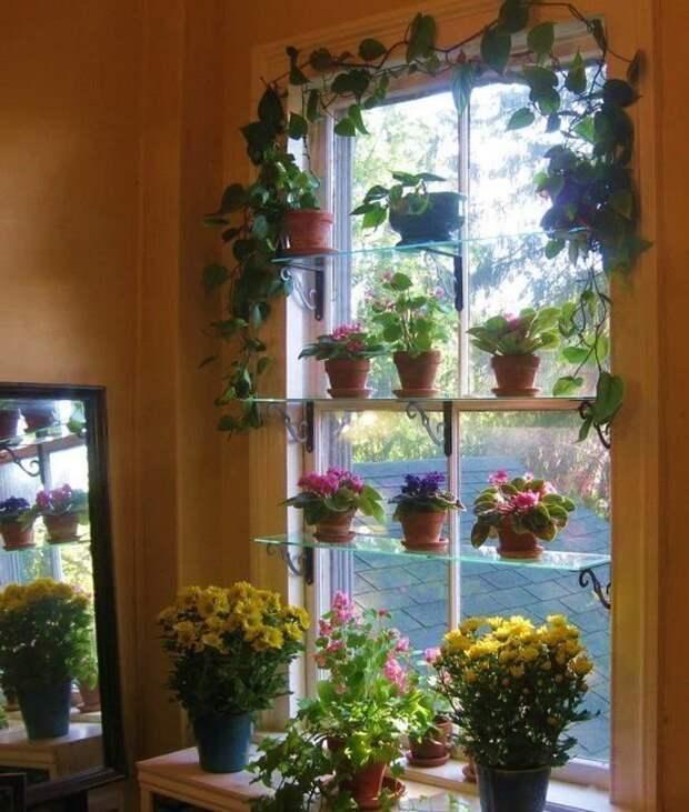 Можно сделать полочки прямо вдоль окна зеленый, лестницы, полки, растения, этажерки