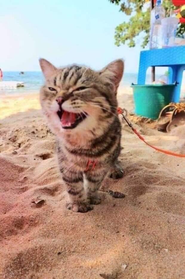 Впервые попав на пляж, котенок улыбнулся до ушей