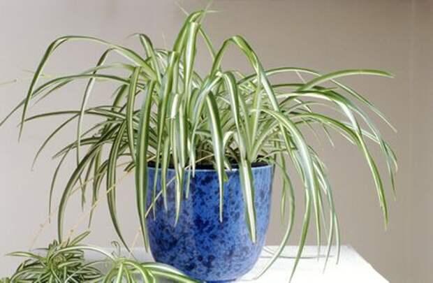ТОП-10 вьющихся растений, отлично живущих в цветочных горшках