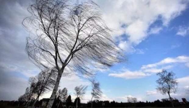 Водителей в Подмосковье просят быть аккуратными на дорогах из‑за сильного ветра