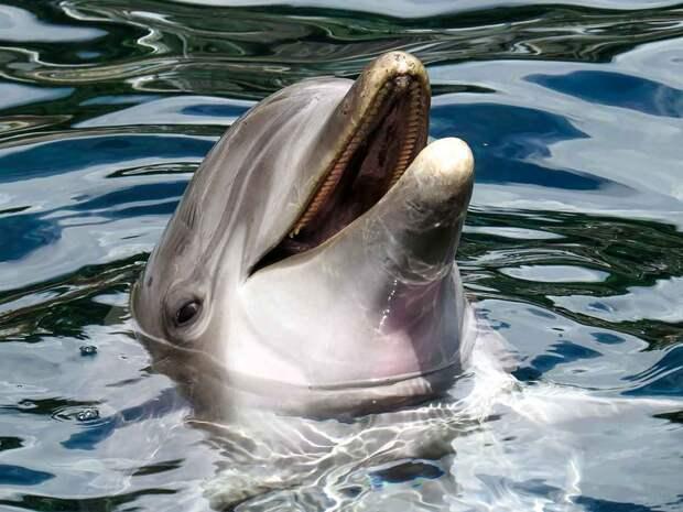 Мертвого дельфина пустили под нож