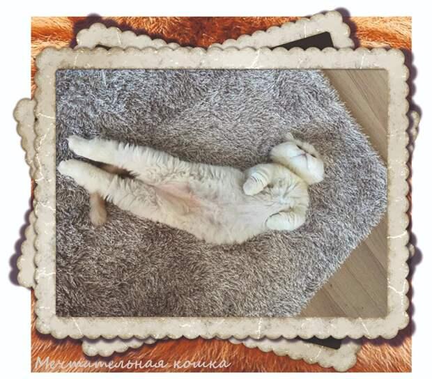 https://www.instagram.com/mandoo.cat1004/