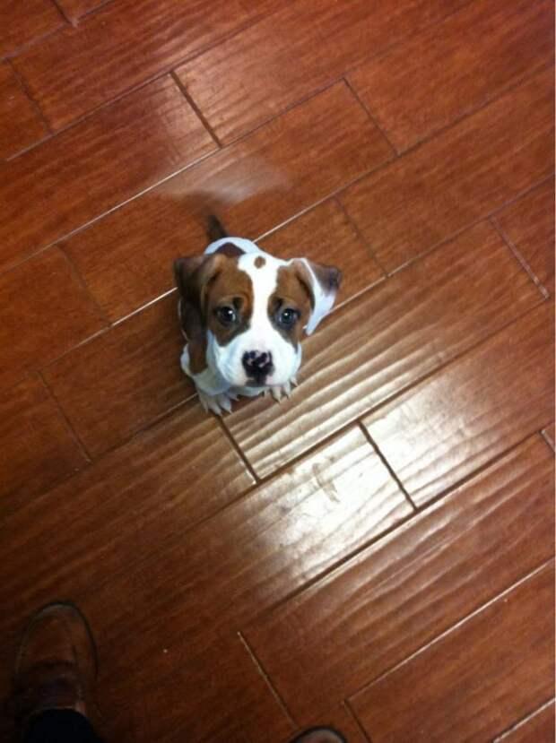 А вы знали, что у каждого щенка есть особая миссия в этом мире?