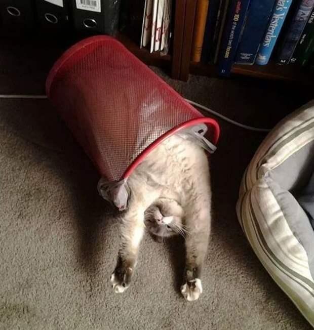 Кошки, которые заснули в самых невообразимых позах