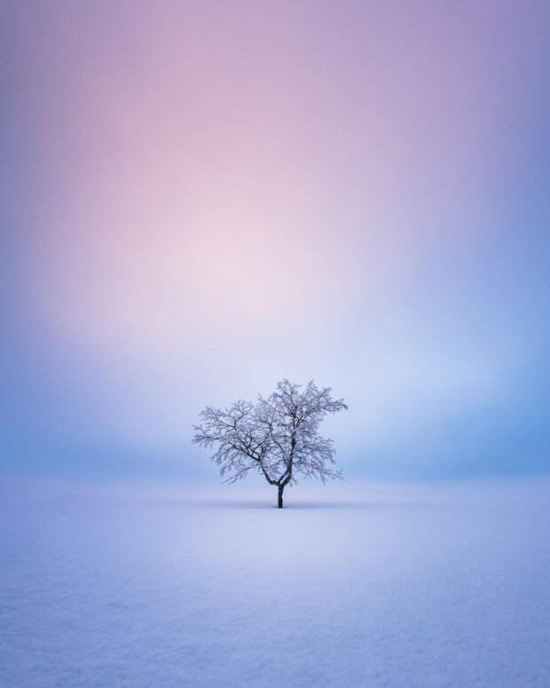 Потрясающие деревья севера в живописных снимках Микко Лагерстедта