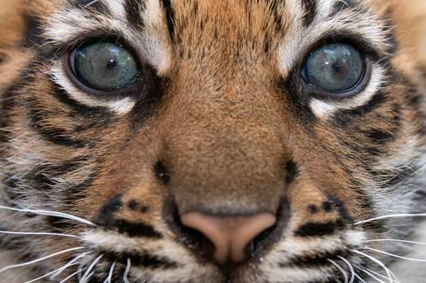 Милые кадры первого купания маленькой тигрюки-злюки