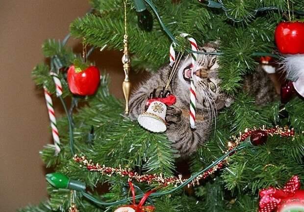 4. А нечего на елку конфеты вешать! животные, новый год, праздник к нам приходит, разрушительная сила, рождество, собаки и кошки, юмор