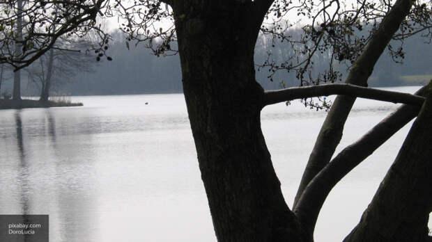 Способ утоления жажды деревьев раскрыли ученые из Новой Зеландии