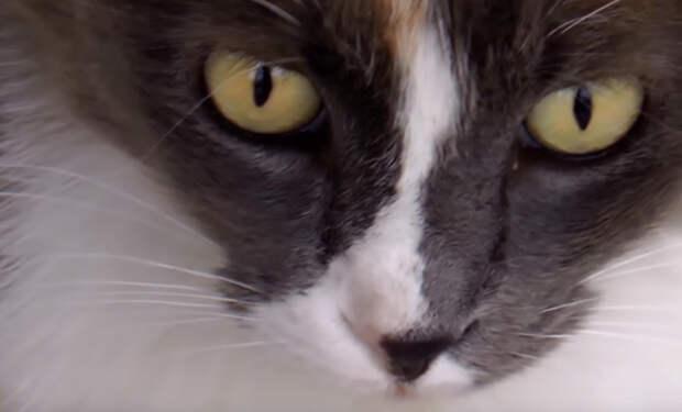 10 самых старых котов на планете
