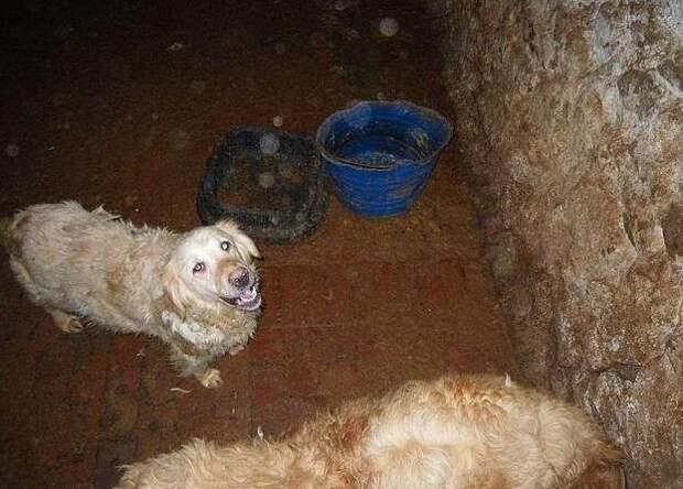 """Владельцу """"фермы ужасов"""" пожизненно запретили содержать животных жестокое обращение, животные, заводчик, защита животных, лабрадудели, преступление и наказание, собаки, ферма ужасов"""