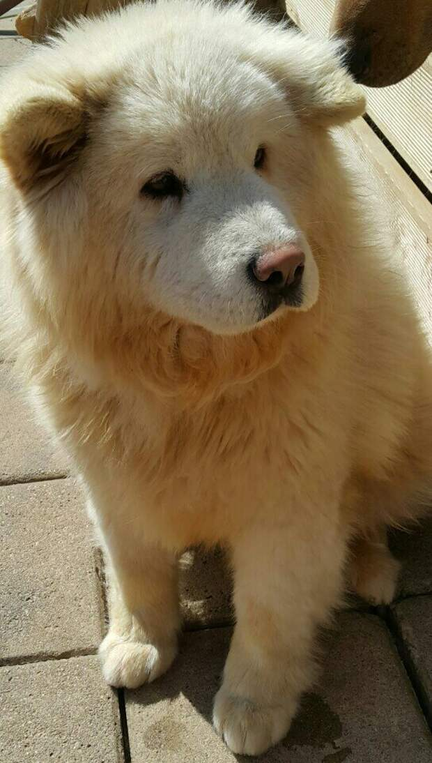 Собаку без шерсти отобрали у владельца прямо на улице