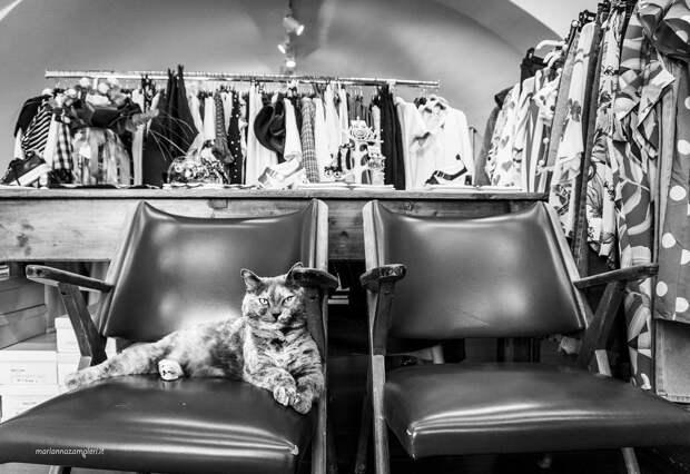 Фотографии кошек, которые живут в местах, где работают люди 20
