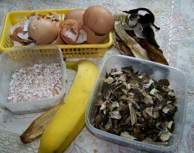 Как подкормить цветы банановой кожурой?