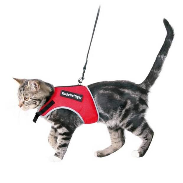 Обзор прогулочных шлеек и поводков для кошки: их преимущества и недостатки
