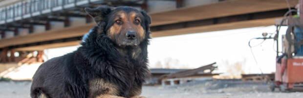 Спасатели вытащили застрявшую под мостом собаку в Алматы