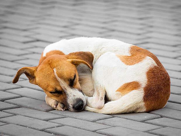 9 странных особенностей поведения кошек и собак, которые уже объяснила наука