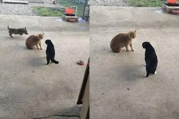 Эмоциональная реакция щенка на ссору уличных котов попала на видео