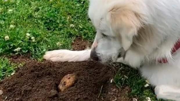 Хозяева не могли понять, почему собака ждет у ямы