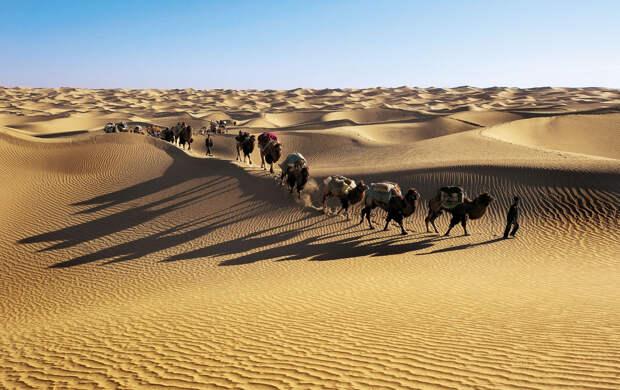 Караван вербдюдов в пустыни Такла-Макан