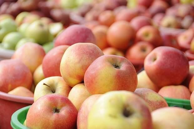 В Ейском районе построили фруктохранилище на 9 тысяч тонн